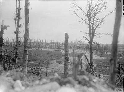 Vue des alentours du Bois de Thiepval, en septembre 1916 [View of the ruined village of Thiepval, from Thiepval Wood, September 1916.] © IWM Q 1076.